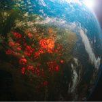 Copyr: verso una sempre maggiore consapevolezza e sostenibilità ambientale insieme a WWF